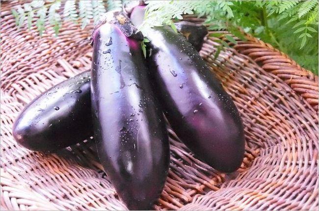 栗原はるみのなすレシピは常備菜にもおすすめ!